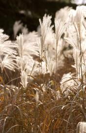 Au moment de la fièvre horticole en mai, les... (Photo Archives La Presse) - image 5.0