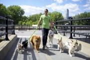 Dominique Firetto a fondé Adorable Doggytown, dans Pointe-Saint-Charles.... (Photo Sarah Mongeau-Birkette, La Presse) - image 3.0