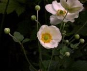 Facile de se laisser séduire par une plante. Sa... (Photo archives La Presse) - image 3.0