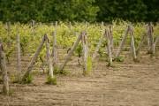 Difficile d'imaginer qu'un vignoble soit situé à quelques... (Photo David Boily, La Presse) - image 1.0