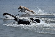 «Ici, c'est la plage des chiens, nous sommes... (PHOTO GABRIEL BOUYS, AFP) - image 1.1