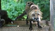 Plusieurs groupes avaient tenté la semaine dernière de... (Photo SPCA) - image 1.1