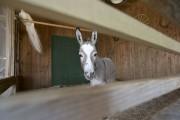 La ferme Régis permet de nourrir les animaux,... (PHOTO HUGO-SEBASTIEN AUBERT, LA PRESSE) - image 3.0