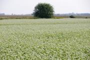 Le sarrasin convient particulièrement bien aux régions où... (Photo David Boily, La Presse) - image 2.0