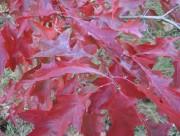 Seule une minorité de frênes pourra être sauvée de l'agrile, d'autant plus que... - image 4.0