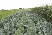 Le Centre d'initiatives en agriculture de la région... (PHOTO FOURNIE PAR LE CIARC) - image 4.0