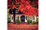 Quel plaisir d'admirer tous ces arbres colorés par... (@emilieoconnor) - image 1.0