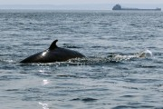 Le Parc marin Saguenay-Saint-Laurent est l'un des maillons... (Photothèque Le Soleil) - image 2.0