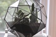 Pour faire pousser un cactus, il faut... (Photo fournie par le fabricant) - image 3.0