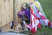 Les photos des chiens de Nathan Cirillo aux... (PHOTO PETER POWER, LA PRESSE CANADIENNE) - image 1.0