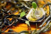 Une huître façon Clocher Penché... (Le Soleil, Yan Doublet) - image 4.0