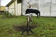 Chaque jour, une visite inhabituelle les attend à... (PHOTO RODRIGO BUENDIA, AFP) - image 2.0