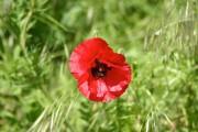 Les abeilles ne voient pas le rouge de... (www.jardinierparesseux.com) - image 1.1