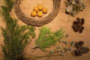 Faire soi-même sa couronne de Noël? La fleuriste... (Photo François Roy, La Presse) - image 1.0