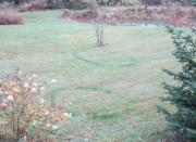 Les deux cercles plus foncés dans le gazon... (PHOTO JEAN-R. CARON) - image 2.0