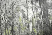 Evelyne Boulva, Eucalyptus... - image 4.0