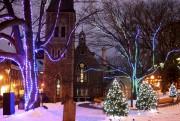L'événement Enlace un arbre, présenté depuis la mi-décembre... (Photo Catherine Noiseux) - image 10.0