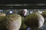 Benoit Faucher est président de la Boulangerie St-Méthode.... (PHOTO FOURNIE PAR LA BOULANGERIE ST-MÉTHODE) - image 6.0