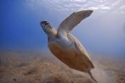 Une fois initiés à la plongée de façon... (Photo Thinkstock) - image 1.0