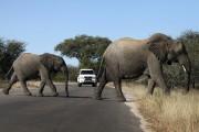 Il n'est pas rare de voir des éléphants... (Photo archives AFP) - image 4.0
