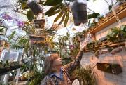 Les orchidées aident Patricia Caris à traverser les... (Le Soleil, Yan Doublet) - image 2.1