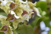 Patricia Caris possède plus de 400 orchidées, dont... (Le Soleil, Yan Doublet) - image 1.0