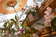 Les propriétaires maintiennent le taux d'humidité dans leur... (Le Soleil, Yan Doublet) - image 1.1