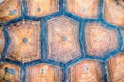 Les écailles centrales de la carapace de certaines... (Shutterstock, roroto12p) - image 1.0