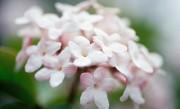 Au printemps, les notes florales sont très présentes.... (PHOTO MASTERFILE) - image 1.2