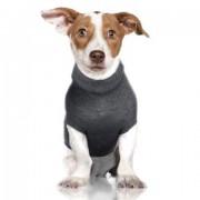 Le luxe canin n'a pas de limite. Déjà... (PHOTO TIRÉE DU SITE CHIEN MONDAIN) - image 2.0
