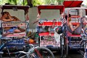 Chaque année, la chaleur tue des centaines de... (Photo Manish Swarup, AP) - image 4.0