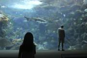 À l'Aquarium, apprêtez-vous à être confronté à de... (PHOTO SYLVAIN SARRAZIN, LA PRESSE) - image 2.1