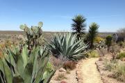 Visitez le jardin botanique el Charco del Ingenio... (PHOTO JEAN GAGNON, COLLABORATION SPÉCIALE) - image 1.0