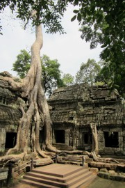 Le temple Ta Prohm, où des arbres poussent... (La Tribune, Jonathan Custeau) - image 1.0