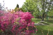 Parc Marie-Victorin, Kingsey Falls.... (PHOTO FOURNIE PAR LE PARC MARIE-VICTORIN) - image 11.0