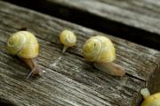 Impitoyables petites bêtes, certains insectes font... (PHOTO TIRÉE DE LA VIDÉO) - image 4.0