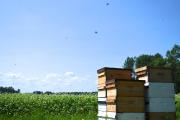 Le miel Abitémis... (PHOTO TIRÉE DE LA PAGE FACEBOOK DE MIEL ABITÉMIS) - image 2.0