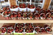 C'est le temps des fraises à la ferme... (Le Soleil, Patrice Laroche) - image 2.0