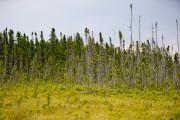 La tourbière offre des paysages presque sortis d'un... (PHOTO DAVID BOILY, LA PRESSE) - image 2.1