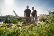 L'idée d'avoir leur propre potager sur le toit... (PHOTO OLIVIER PONTBRIAND, LA PRESSE) - image 6.0