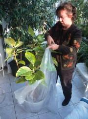 Une plante scellée dans un sac de plastique... (Photo www.jardinierparesseux.com) - image 3.0