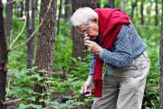 André Fortin, 77 ans, cueille des champignons depuis... (Le Soleil, Patrice Laroche) - image 1.0