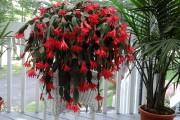Les fleurs étoilées du cactus de Pâques ne... (www.jardinierparesseux.com) - image 2.1