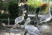 Le zoo de Schönbrunn compte près de 500... (PHOTO CATHERINE SCHLAGER, LA PRESSE) - image 1.1