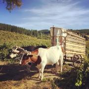 Le paysage viticole du Chili est en pleine... (Photo fournie par Garage Wine Company) - image 1.0