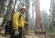 L'arbre «General Grant» est surveillé 24 heures sur... (PHOTO AP) - image 2.0