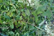 Les marges des feuilles et certaines tiges de... (Photo Myriam Dunn) - image 14.0