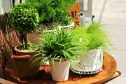 Les plantes tropicales qui ont passé l'été dehors... (PHOTO THINKSTOCK) - image 1.0