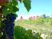 Au Domaine de Lavoie, la récolte commence à... (PHOTO FOURNIE PAR LE DOMAINE DE LAVOIE) - image 2.0
