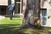 L'arbre qu'a heurté la conductrice sur la rue... (Photo Robert Skinner, La Presse) - image 3.0
